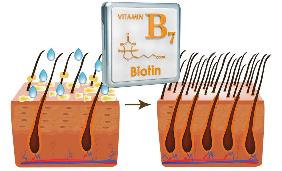 biotin of hair development